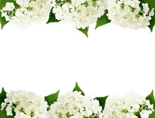 White Hydrangea Flowers Edges