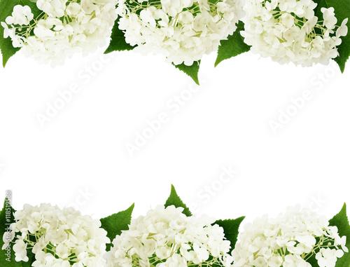 Deurstickers Hydrangea White hydrangea flowers edges