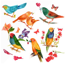 Set Of Victorian Style Vector Watercolor Birds With Butterflies