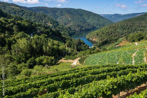 Fotografie, Obraz  Vineyards along the River Minho, Lugo (Spain)