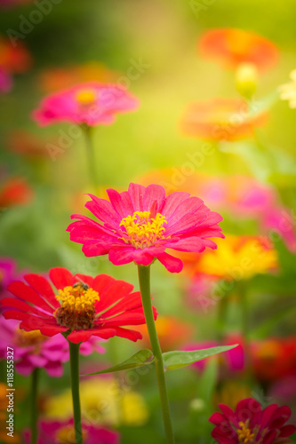 Poster Jaune The background image of the colorful flowers