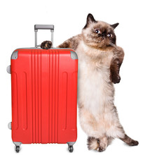 Cat With A Suitcase . Isolated On White.