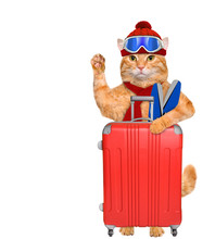 Cat With Skis With A Suitcase.  Isolated On White.