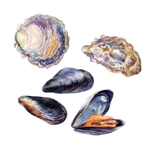 Oyster And Mussel Edible Sea M...