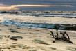 korzeń na plaży