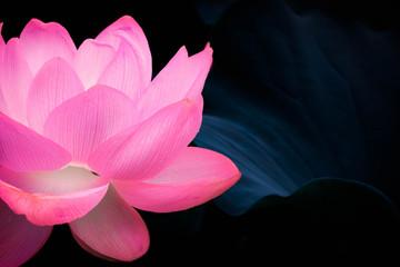Panel Szklany Podświetlane Liście 幻想的な蓮の花