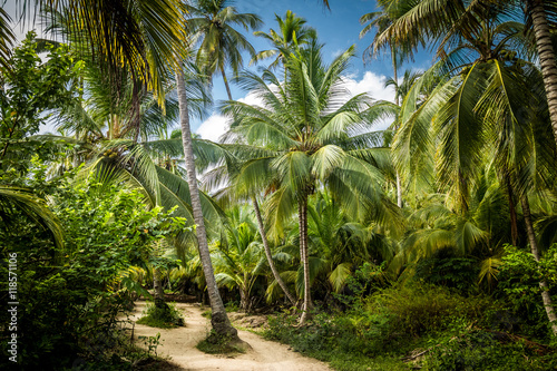 Fotografie, Obraz  Path on a Palm Tree Forest - Tayrona Natural National Park, Colombia