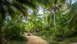 Fototapeta Las - Path on a Palm Tree Forest - Tayrona Natural National Park, Colombia