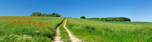 Small Dirt Road Through Green Fields Full Of Red Poppies, Panoramic Spring Landscape Under Blue Sky