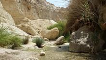 Oasis Of Ein Gedi In Israel