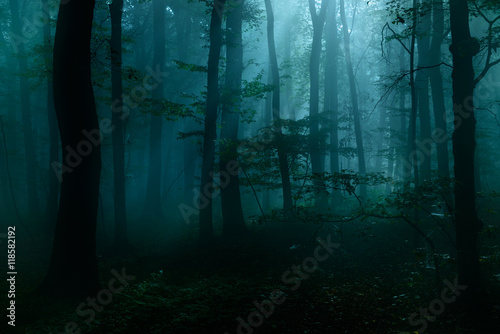 Fototapeten Wald Forest of Deciduous Trees at Night Illuminated by Moonlight, Spooky Mystic Atmosphere