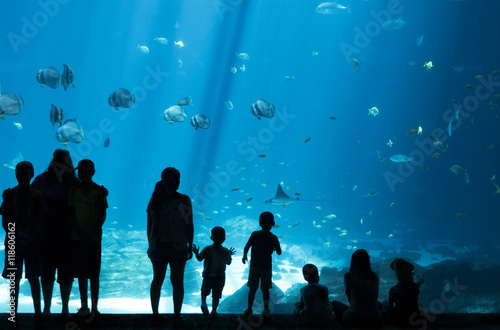 Fotografie, Obraz  Silhouettes of People looking at Fish in huge Aquarium, Fish Tank