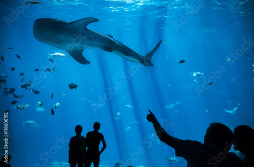 Silhouette Man pointing at huge Whale Shark at Aquarium, Fish Tank