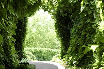 Fototapeta Green arch in botany garden