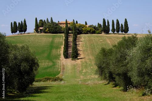 Paysage Toscane - 118645712