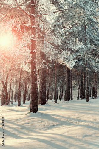 Foto-Leinwand ohne Rahmen - Winter forest landscape with the winter frosty trees in winter sunset - colorful winter forest in soft vintage tones. (von syntheticmessiah)