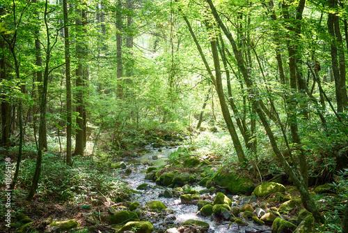 Fotografering  森の小川