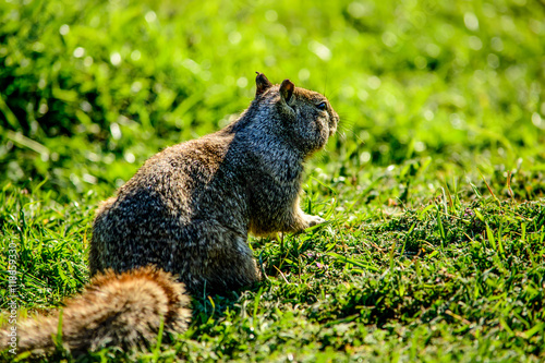 Photo  Close Up Squirrel on Grass
