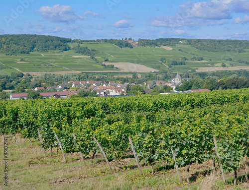 Wall Murals Vineyard Weinbau in Rheinhessen bei Ingelheim,Rheinland-Pfalz,Deutschland