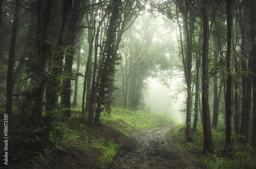 Door stickers Khaki forest fog road