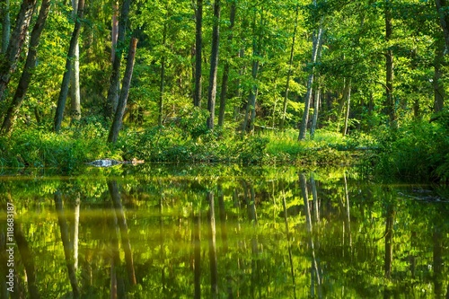 Spoed Foto op Canvas Groene Kayaking by wild river in poland (Omulew river)