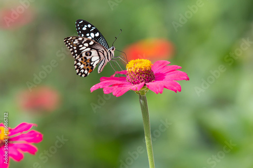 Foto auf Gartenposter Schmetterlinge im Grunge Beautiful butterfly with brightly colored flower