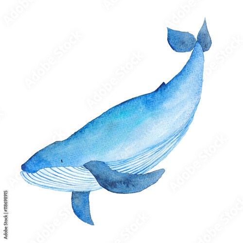 Fotografie, Obraz  Blue Whale Watercolor hand-painted Illustration Sea animals Blue Whales Isolated