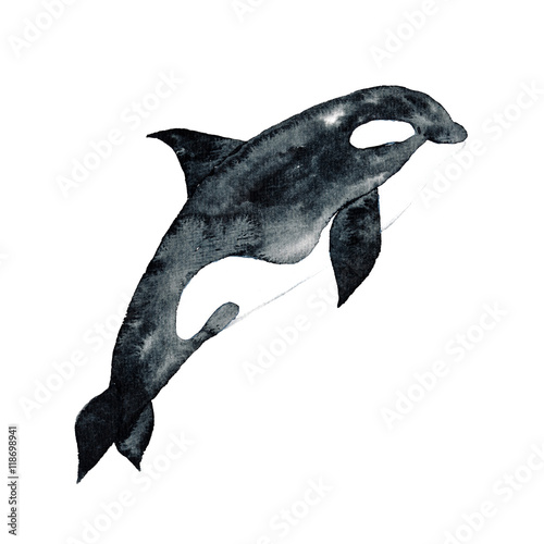 Fotografia  Killer Whale Watercolor hand-painted Illustration Sea animals Blue Whales Isolat