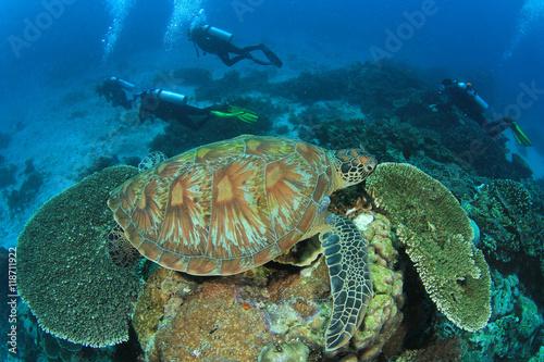 Sea turtle and scuba divers #118711922