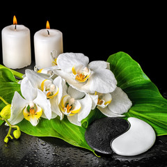 Fototapeta Do Spa spa concept of orchid flower, phalaenopsis, leaf with dew, candl
