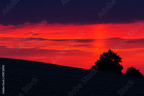 Foto op Plexiglas Rood Red sky at sunset. Silhouette of tree on field