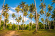 Coconut palm tree farm summer holiday