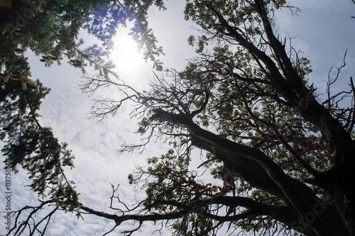 Photo sur Toile Oiseaux sur arbre Treetops in sun