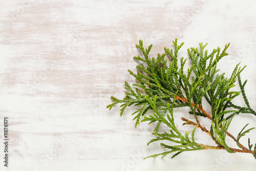 Foto  Thuja twigs on wooden background