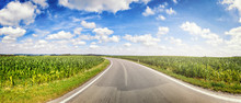 Panoramic Landscape With Country Road And Corn Fields. Nature Background