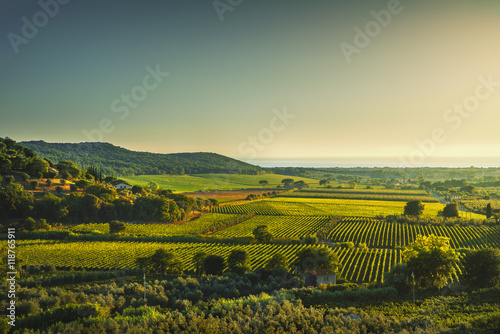 Foto auf Gartenposter Weinberg Bolgheri and Castagneto vineyard aerial view on sunset. Maremma