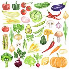 Watercolor Vegetables Set. Fre...