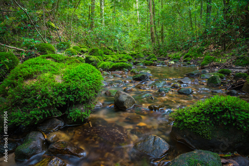 Aluminium Prints Forest river Beautiful cascade falls in forest