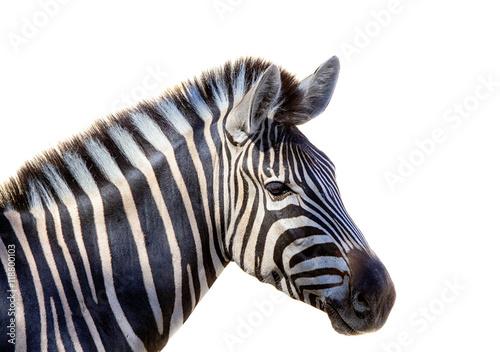 Poster Zebra Cabeza de cebra aislada en fondo blanco