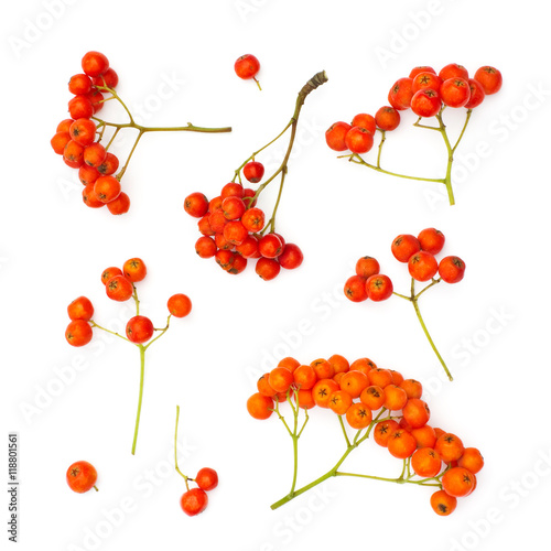 Fotografie, Obraz  Isolated juicy rowanberries on a white background