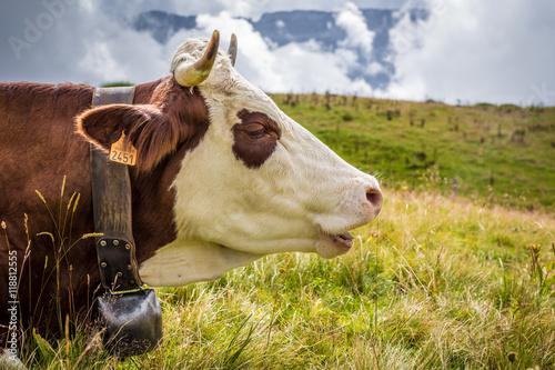 Papiers peints Vache Portrait d'une vache laitière