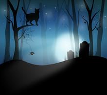 Dark Forest Night