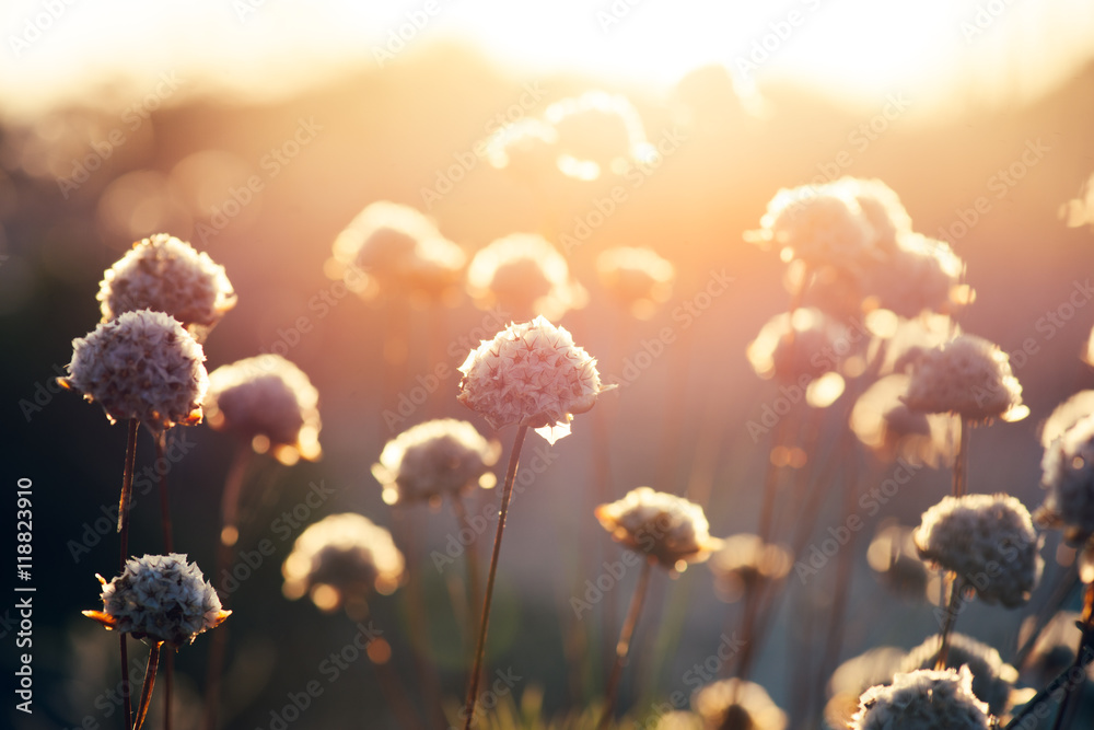 wildflowers in a meadow at sunset