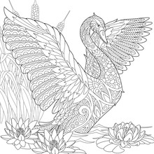 Stylized Beautiful Swan Among Water Lilies (lotus Flowers) And Reed Grass. Freehand Sketch For Adult Anti Stress Coloring Book Page With Doodle And Zentangle Elements.