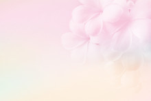 Frangipani (plumeria) , In Soft Color And Blur Style For Background