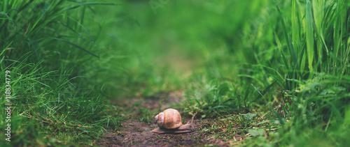 close up snail littleness in tall green grass