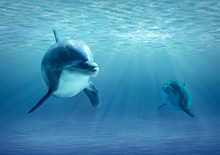 Two Dolphins Under Water