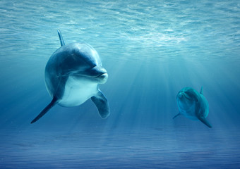 FototapetaTwo Dolphins Under Water