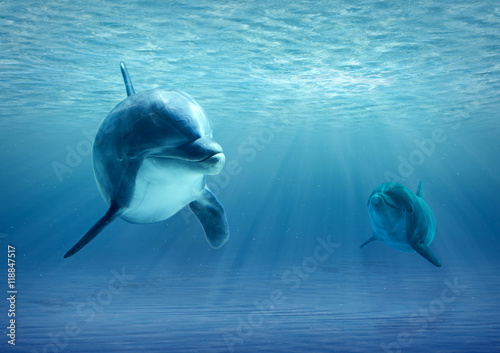 Stickers pour portes Dauphin Two Dolphins Under Water