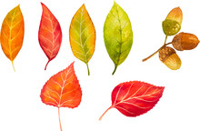 Autumn Watercolor Leaves. Fall Illustrations.